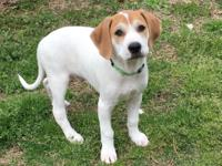 Adorable hound mixes!! Patsy Cline, Johnny Cash and