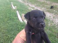 We have 3 black female pups readily available. Both