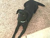 Patty's story Patty is a sweet and calm small Lab mix!
