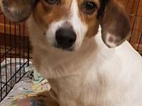 My story Paula is a 2-3 year old Beagle mix that weighs