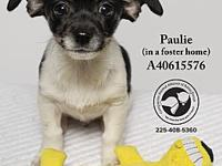 Paulie (In a Foster Home)'s story All dogs come with a