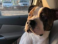 Paulie's story Meet Paulie. Rescued from Death row in