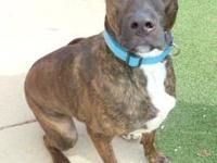 Paulie's story Paulie is a 1 year old Shepherd/Boxer
