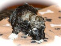 Pavel is 3 weeks old, born on January 17, 2013. He is a