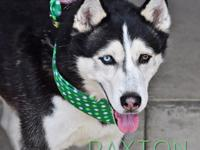Im Paxton, a 4 year old boy just looking for his