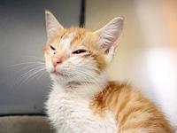 Peaches's story Orange you special! This sweet kitty is