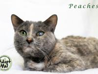 Peaches is a very sweet declawed senior 14 year old