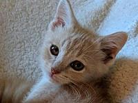 Peaches's story This beautiful boy Peaches is the
