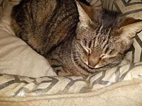 Peaches-Marie's story This beautiful brown tabby girl