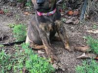 Peanut's story Peanut is a female Catahoula leopard
