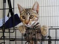 Peanut's story Im Peanut, a very affectionate and