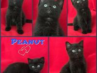 Peanut's story Peanut is a loving, playful little fur