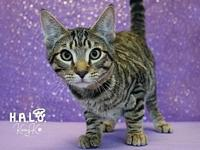 Peanut's story $100All of our pets are spayed/neutered,