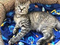 Peanut Kitten's story You can fill out an adoption
