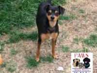 Peanut is a 4 year old Min Pin. He is good with kids,