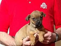 Peanut's story See more adoptable puppies at