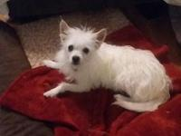 My story Peanut is a 3 year old terrier mix. He can