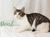 Pearl's story Hi, my name is Pearl! I am a sweet,