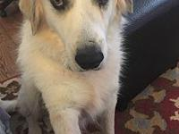 Pearl's story Pearl is a sweet 5 yr old Great Pyrenees