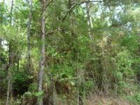 231 acres of mixed woods with hardwoods and pine. Lots