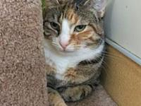 Pebbles 2's story Pebbles 2 Age: 5 years old DSH/Spayed
