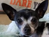 Pebbles is a sweet little dog with a lot of love to