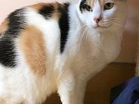 Pebbles's story Pebbles Age: 6 years old DSH/Spayed