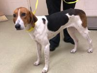 Pebbles is a female Hound. She may possibly be a