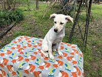 Pebbles's story Very sweet playful puppy is good with