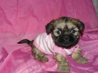 Pebbles is a beautful little lady! She enjoys to play!