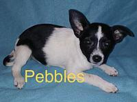My story Hello there! My name is Pebbles of the