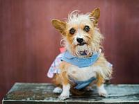 Pecan-ADOPT Mee!'s story Hello Nice Humans my name is