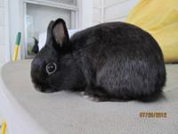 I have 2 netherland dwarf rabbits left that are ready