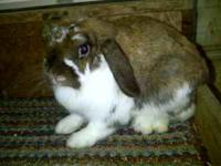 San Juan Rabbits For Sale In South Carolina Classifieds Buy And