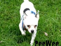 Pee Wee is a loving, afectionate little person and is