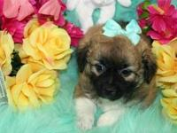 Adorable PekaPoo Puppies, CKC Registered, These puppies