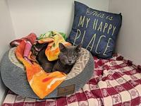 Peek a Boo's story This cutie pie is new to the shelter