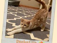 PEEKABOO's story Peek-a-boo came to Lincoln from