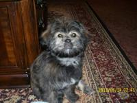 Lacey is 5 months old very playful loves adults,