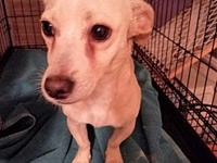 PEEWEE's story I AM A HAPPY AND LOVEABLE SMALL DOG. I