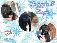 Peggy's 3 Boys's story PEGGYS 3 BOYS: We think these