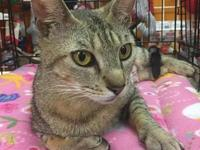 Peggy Sue's story Peggy Sue is a very loving cat and