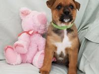 AVAILABLE 4/14: Peggy (female/green collar)  Peggy is