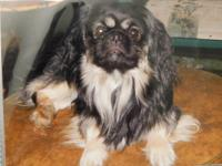 i have a four year old male pekingese born march