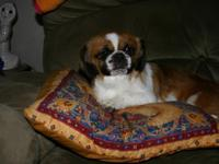 I have a nice Pekingese female that needs a new home. I