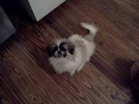 I have a pair of pekingese a girl and a boy that I need