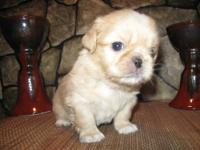 We have four Beautiful Pekingese puppies for sale. We