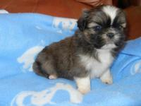 BEAUTIFUL LITTLE MALE, 8 WEEKS OLD, LOVES TO PLAY,