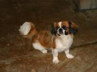 I have a nice pair of Pekingese that need new homes. I