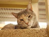 My story Meet Pele, a grey tabby who arrived at